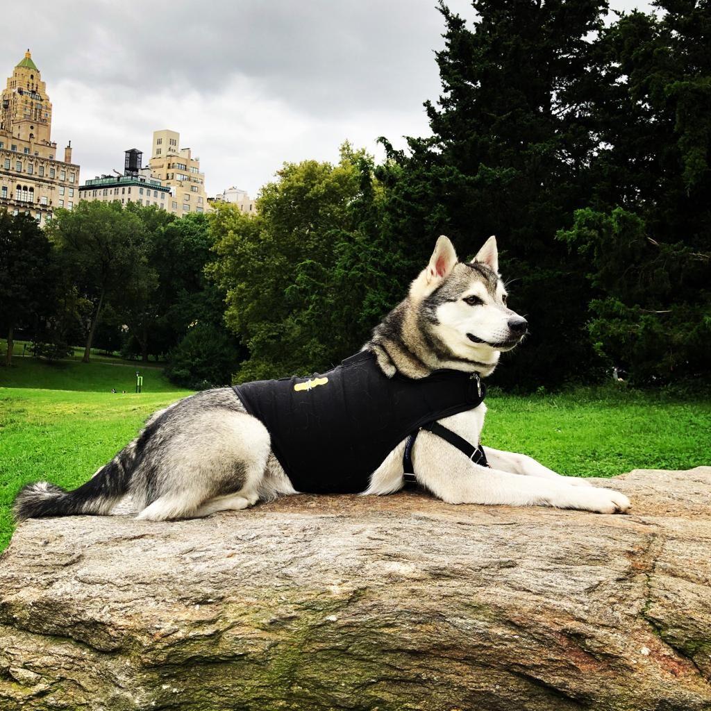 Alaskan Klee Kai - Dog Breeds Finder