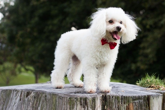 dog standing on a chopped tree