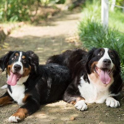 2 dogs chilling outdoors