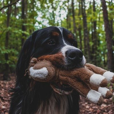 cute pup playing with his toy
