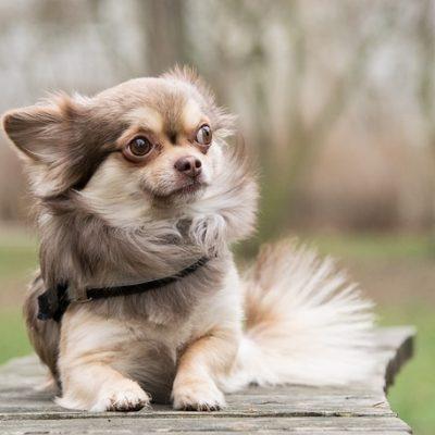 cute small pup
