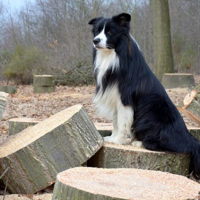 dog sitting down on pile of wood