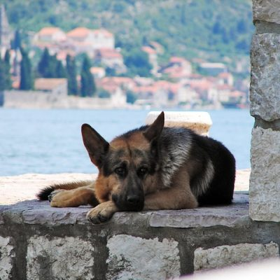 a dog chilling outside